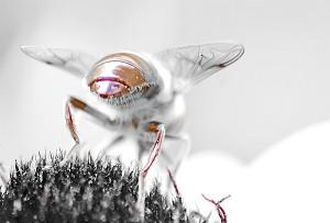 Οι μέλισσες μπορούν, οι άνθρωποι όχι.