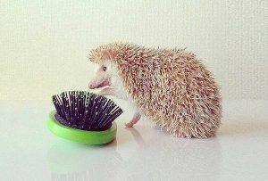 Hedgehog's dilemma