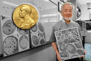 Deciphering cell's recycling machinery earns Nobel