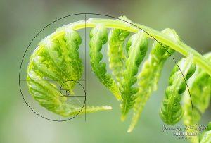 Πυθαγόρειες τριάδες  και αριθμοί Φιμπονάτσι
