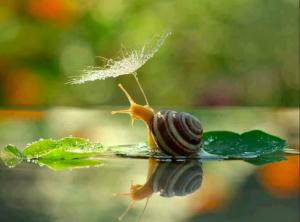Η Φύση, η μητέρα των πάντων, στέλνει ανέμελα τα παιδιά της να εκτεθούν σε χίλιους κινδύνους (Arthur Schopenhauer)