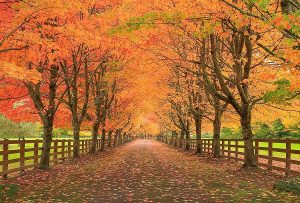 Το φθινόπωρο (FRIEDRICH HOLDERLIN)