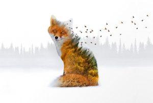 Όταν η αλεπού κατάλαβε πως δεν θα κατάφερνε ποτέ να φτάσει τα σταφύλια … (ΑΙΣΩΠΟΣ)